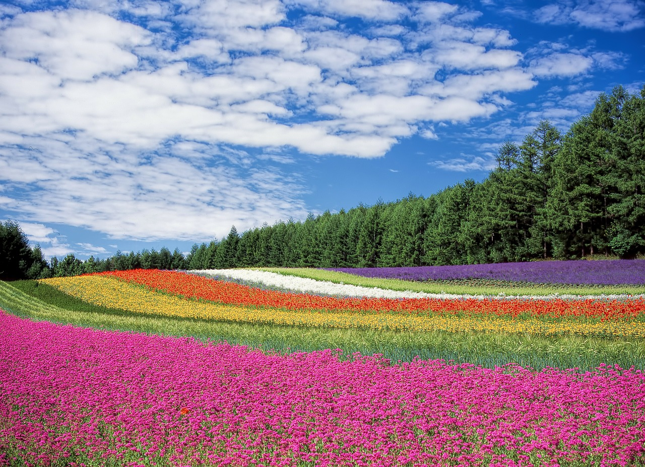 Jardin fleurs au Japon